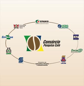 Observatório do Café visa à sustentabilidade da cafeicultura