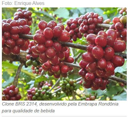 Artigo: Ciência e evolução social na cafeicultura Amazônica