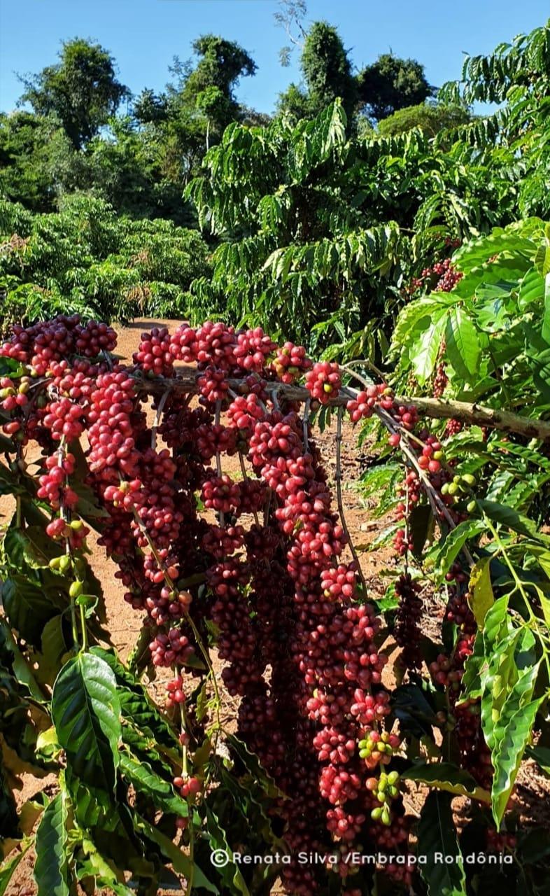 Artigo: Quem ama florestas, consome cafés sustentáveis