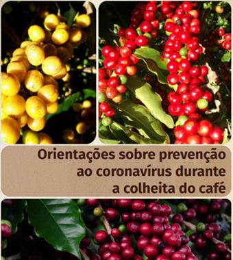 EMATER–MG lança cartilha sobre prevenção do coronavírus durante a colheita do café
